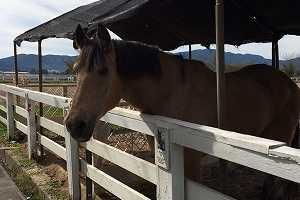 馬を身近に感じる牧場の仕事に興味はありますか