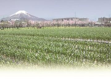 農業生産法人株式会社 I JAPAN-3