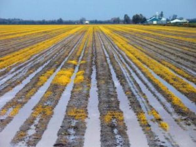 wet-morning-field_2234383