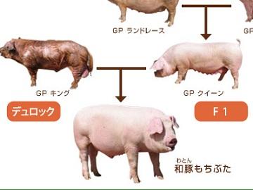 川作ファーム株式会社-1