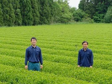 鹿児島堀口製茶有限会社-1