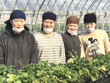 鈴木農園(上三川町)-2