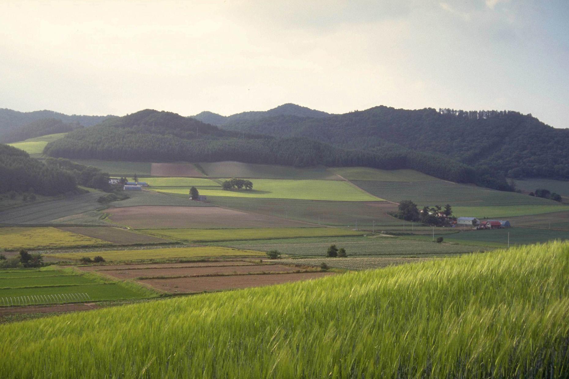 耕作放棄地解消への取り組み