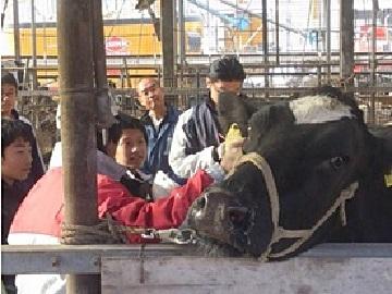 清水町×酪農/個人【4544】-3
