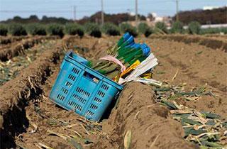 日本の食生活と農業