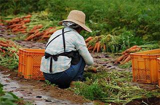 少子高齢化時代の農業プロセス