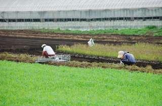 農業の支援情報について