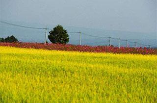 デフレと農業
