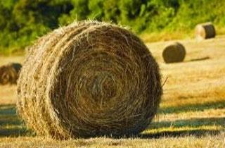 注目の酪農のしごと