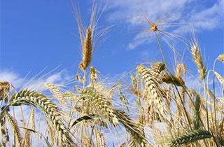 農業と消費と文化