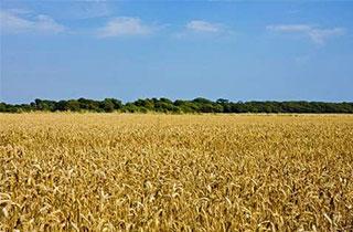 耕作放棄地と取組み、福祉等