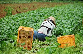 人手不足を補うこれからの農業