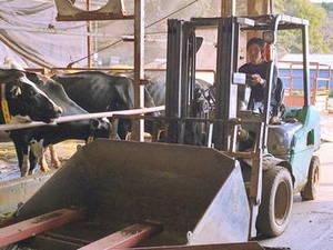 Watanabe Dairy Farm