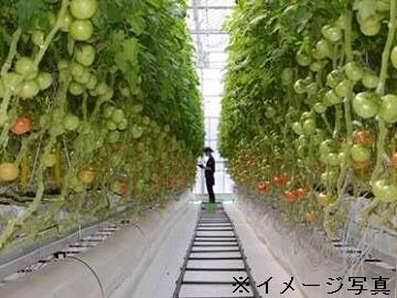笠岡市×施設野菜/法人【0209】-2