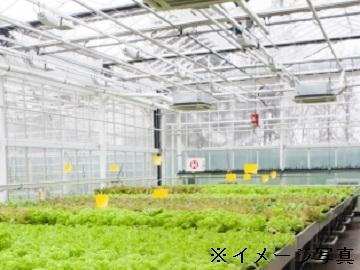 磐田市×施設野菜/法人【0200】-2