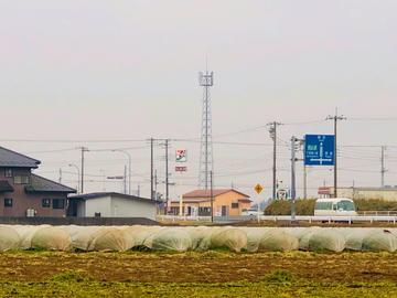 舩津牧場(袖ケ浦市)-5