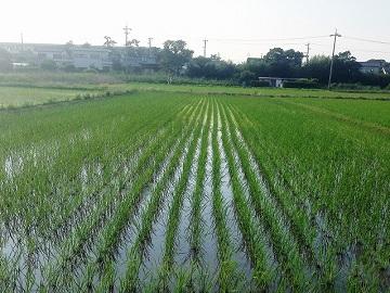 石川農園-1