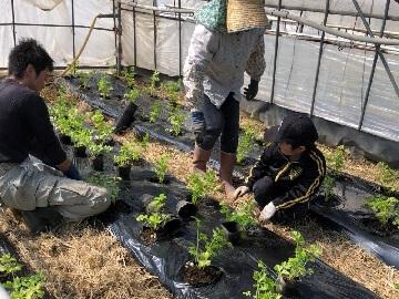 行田農園-3