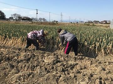 株式会社坂上農園-3