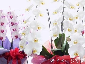 南房総市×花・観葉/法人【31853】-top