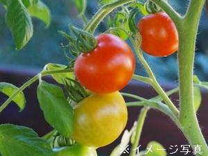 養父市×施設野菜/法人【31881】-1