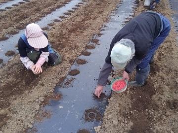 有限会社平山農園-4