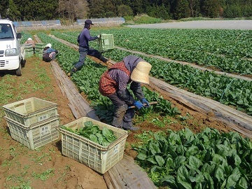 有限会社平山農園-8