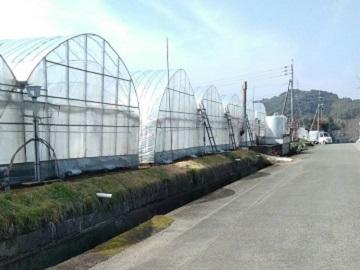 高木農園-2