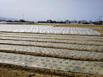 観音寺市×野菜/法人【31925】-1