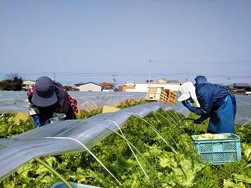 観音寺市×野菜/法人【31925】-2