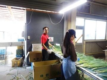 観音寺市×野菜/法人【31925】-4