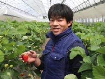 藤原いちご農園-top