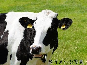 岡嶋牧場-2