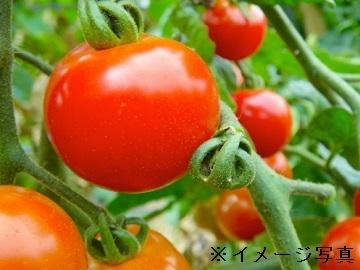 笠岡市×施設野菜(出荷管理)/法人【31919】-top