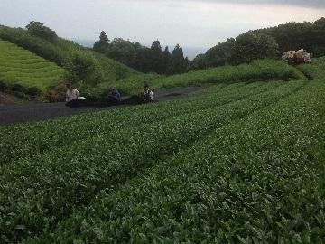 するが農園-2