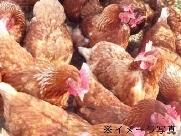 茨城町×養鶏/法人【31965】-top