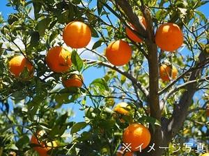 出水市×果樹・野菜/法人-top