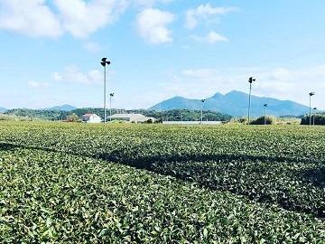 池田製茶-top