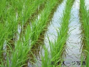 栃木市×稲作/個人【32028】-top