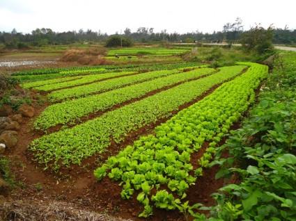農業と福祉の関係