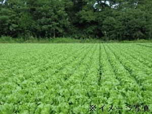 磐田市×野菜/法人【32050】-top