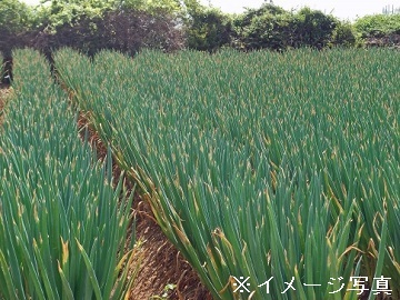 株式会社伊藤畜産 農業部門-1