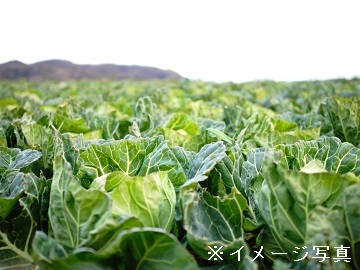 干川農園-2