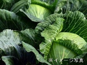 干川農園-top
