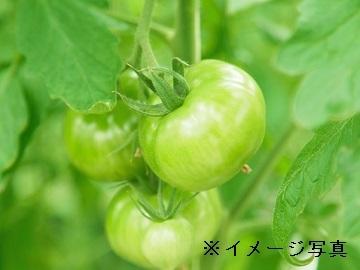 多摩市×福祉(農作業指導者)/法人【32062】-2