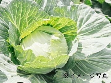 多摩市×福祉(農作業指導者)/法人【32062】-top