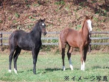 都城市×競走馬/法人【32098】-2