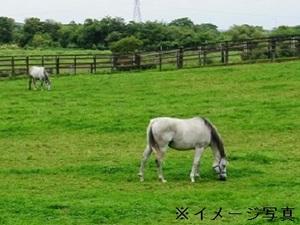 都城市×競走馬/法人【32098】-top
