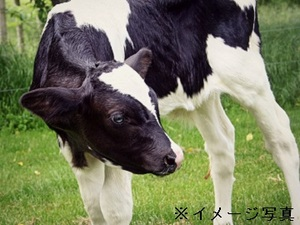那須烏山市×酪農/個人【32124】-top
