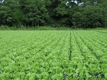 川上村×露地野菜/個人【0837】-top